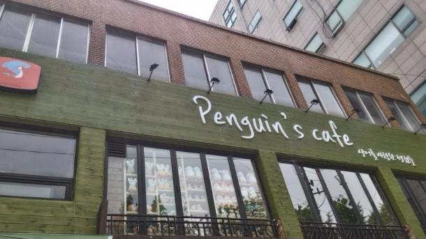 Kim Sohye Penguin Cafe3