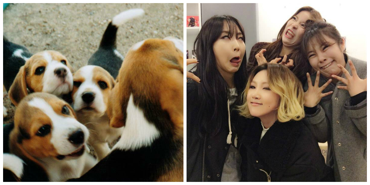 The Beagliest Female K-Pop Idols Of Them All