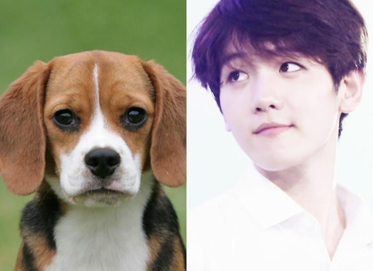 Los ídolos masculinos del K-Pop más beagle de todos