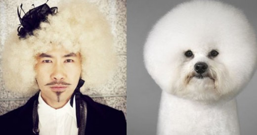 "Who Looks Better: ""Elevator Man"" Noh Hong Chul vs. Poodle Edition"