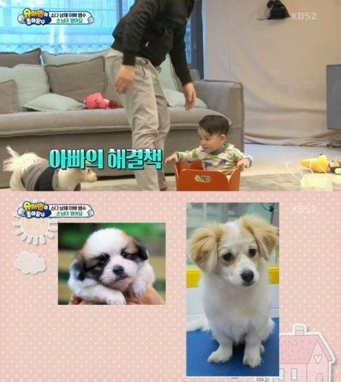 da eul and puppies
