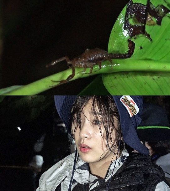 a pink hayoung law of the jungle2