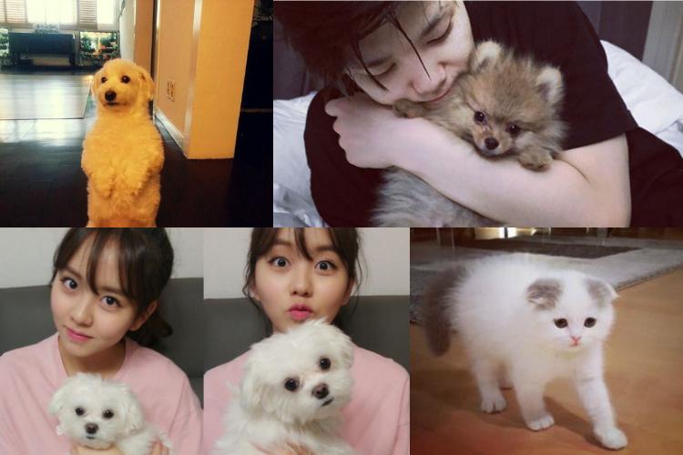 kpop-idols-and-pets