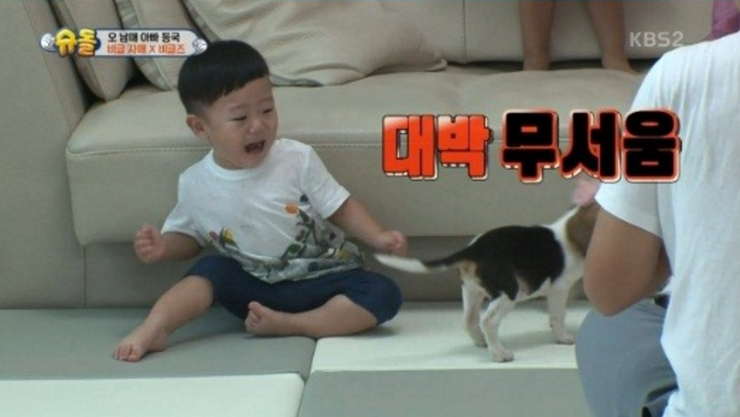Watch: Daebak Goes From Excited To Terrified Of Beagle Puppies, And It's Adorable