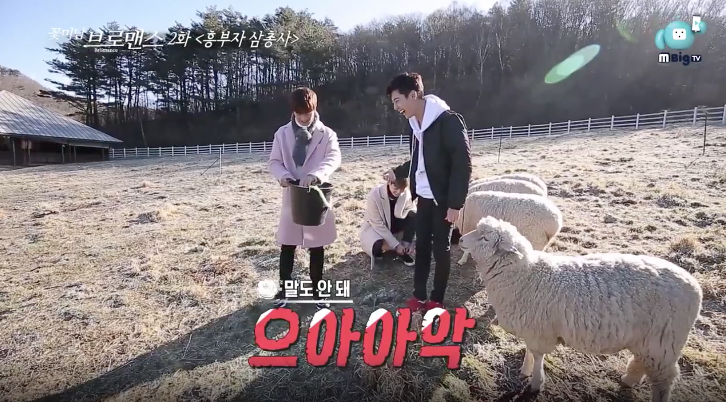 "BTOB's Yook Sungjae And Boyfriend's Youngmin And Kwangmin Test Their Twin Bond And Terrorize Some Sheep On ""Celebrity Bromance"""