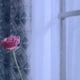 bap rose mv teaser