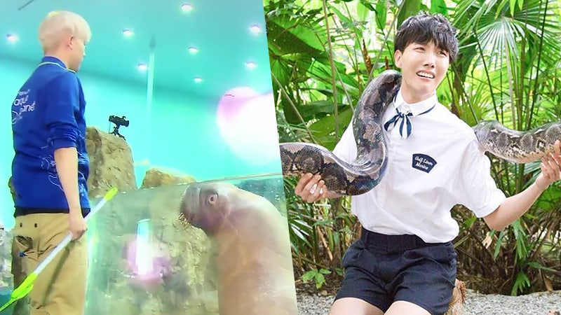 Encountering The Wild: 7 Hilarious Interactions Between Idols And Animals