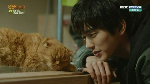 K-Drama Moments That'll Resonate With Your Soul If You Have Pets