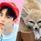 Male K-Pop Idols Who Resemble Adorable Fennec Foxes