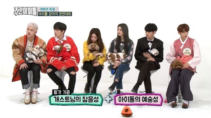 "Watch: Chaos Ensues As Idols Attempt To Perform Missions With Their Pet Dogs On ""Weekly Idol"""