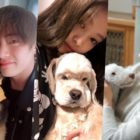 The Cutest Korean Celebrity Pets We're Obsessing Over