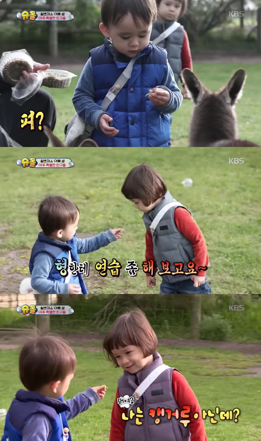 Watch Bentley Hilariously Attempts To Feed William Instead Of Baby Kangaroos On The Return Of Superman Soompi