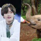 Baby Elephant Adopted In BTS's V's Name Is Adapting Well To His New Home