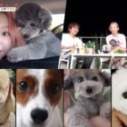 Watch: Taeyeon, Heechul, And More Vacation With Their Pets In Preview For New JTBC Variety Show