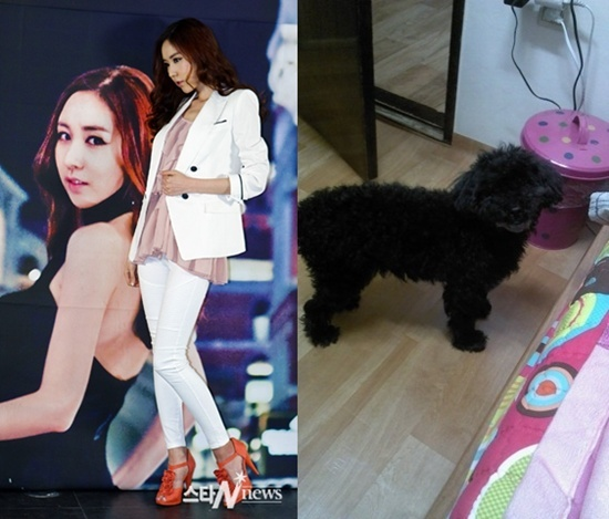 "Kan Mi Yeon's Dog ""Kkami"" Went Missing!"