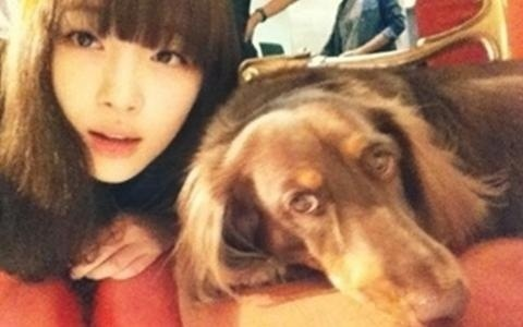 Sulli Competes With a Dog for Best Ulzzang Angle
