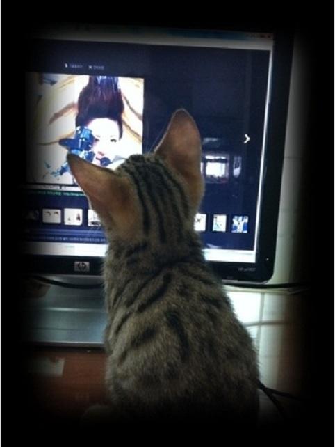 Dadoongi Watching 2NE1's Sandara Park