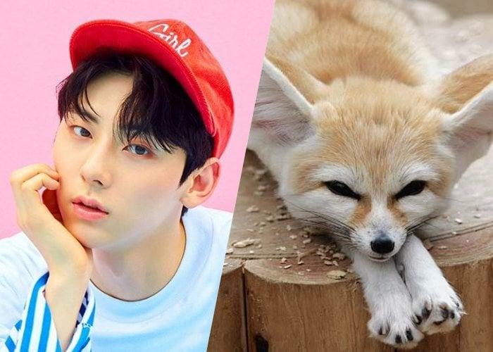 Ídolos del K-pop que nos recuerdan a adorables zorillos fénec