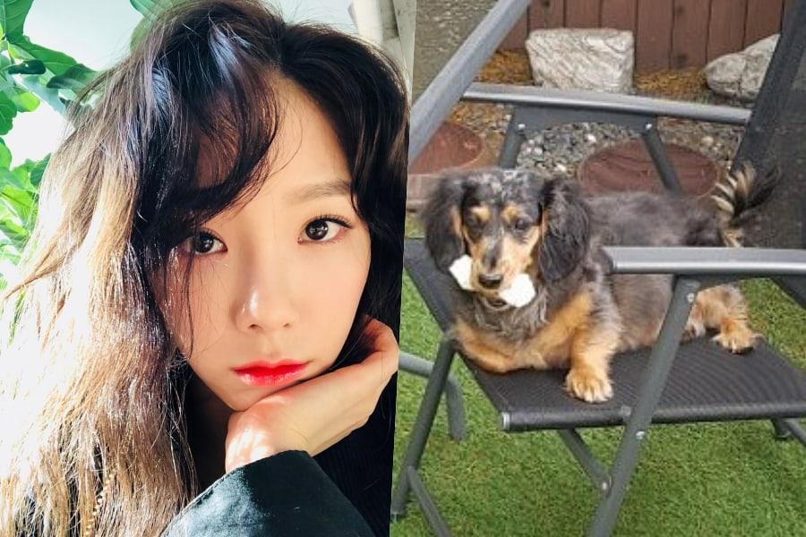 Taeyeon de Girls' Generation pide ayuda para encontrar al perro perdido de Jonghyun de SHINee