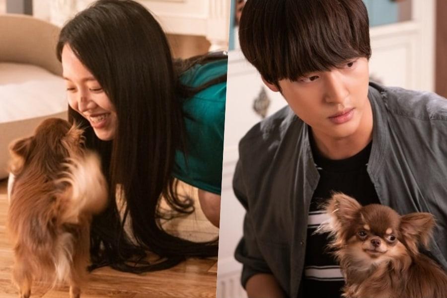 """Shin Hye Sun y Yang Se Jong compiten por el cariño de su perro en """"30 But 17"""""""